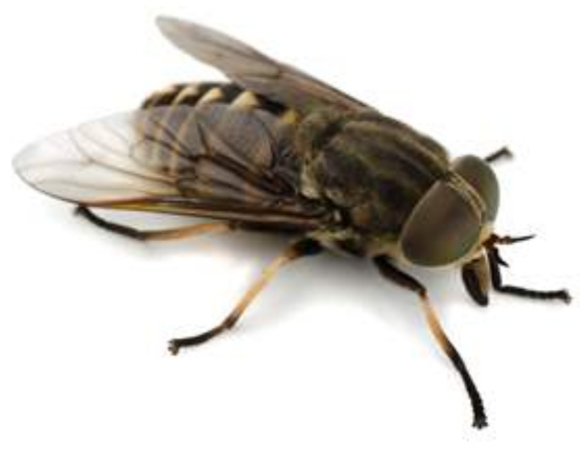 Palm Harbor Horse Fly Infestation - Earth's Best Natural ...