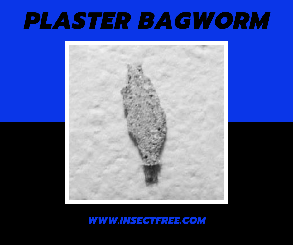 The Plaster Bagworm Earth S Best